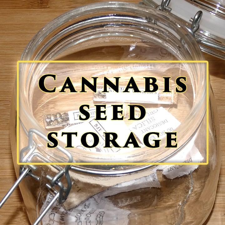 Best Methods To Store Seeds