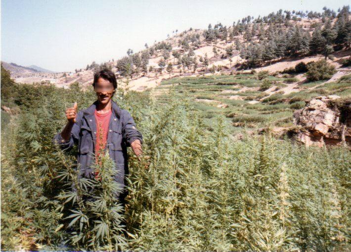 Beldia Marocaine a Ketama.