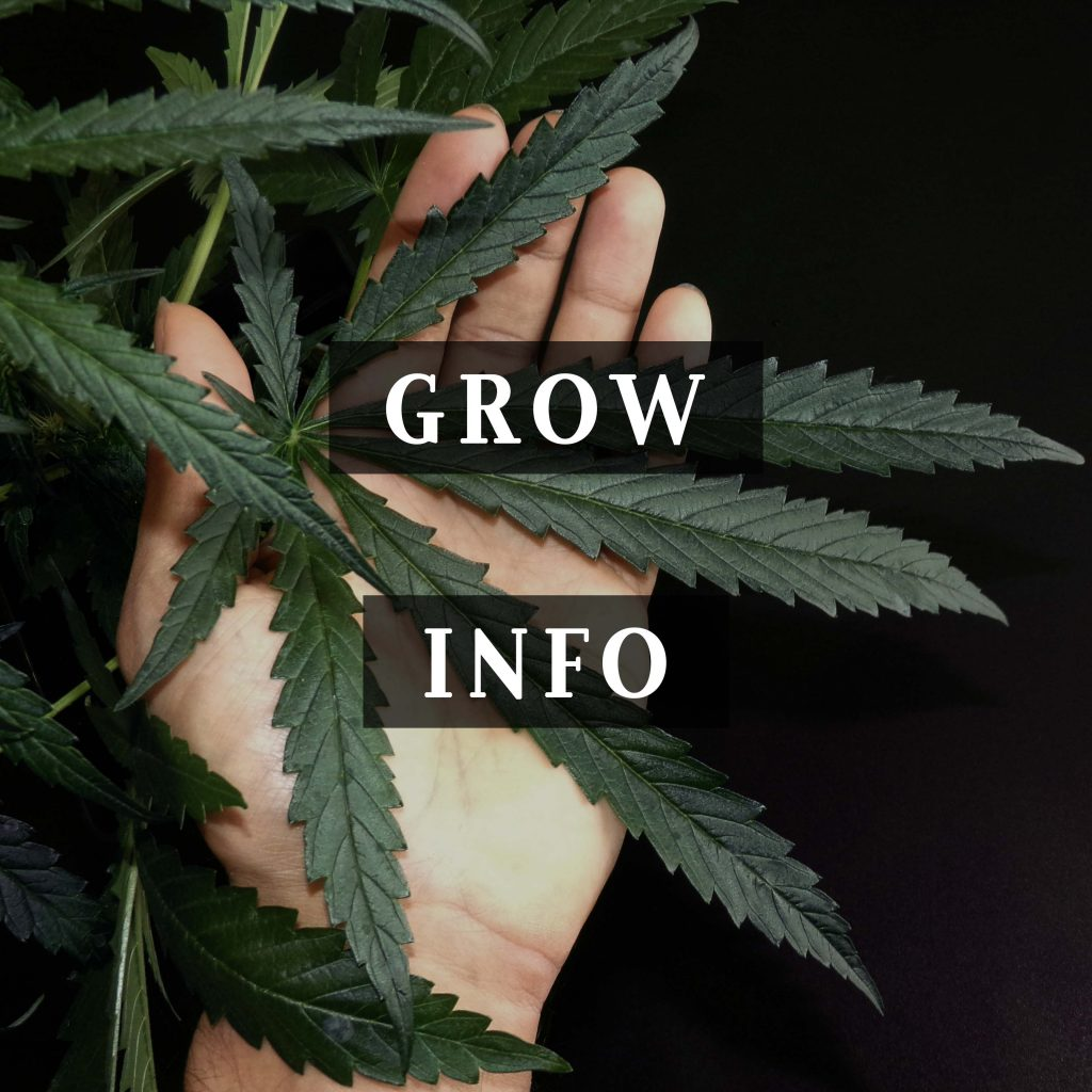 Khalifa Genetics Blog Grow Info