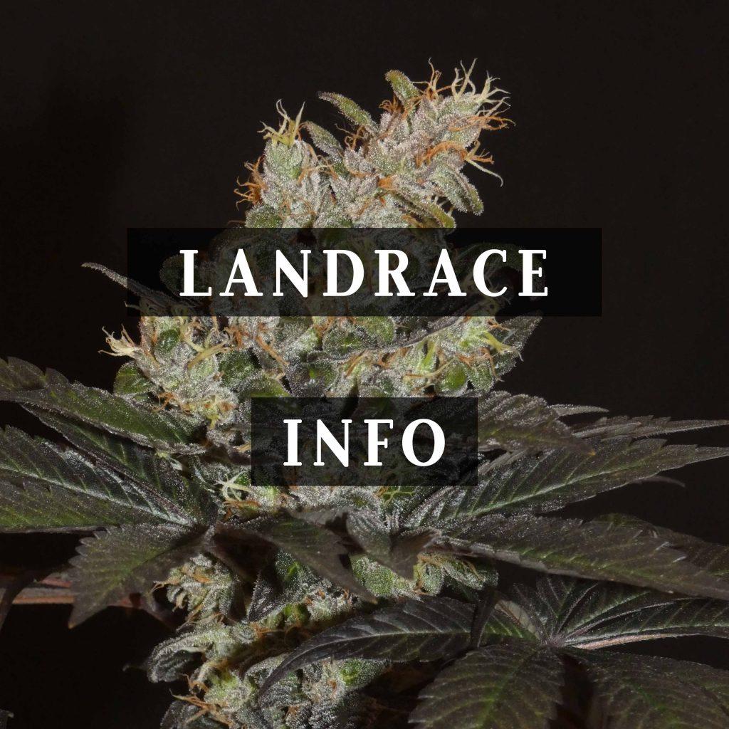 Landrace Info Blog
