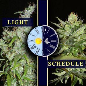 Optimal Light Schedule Post