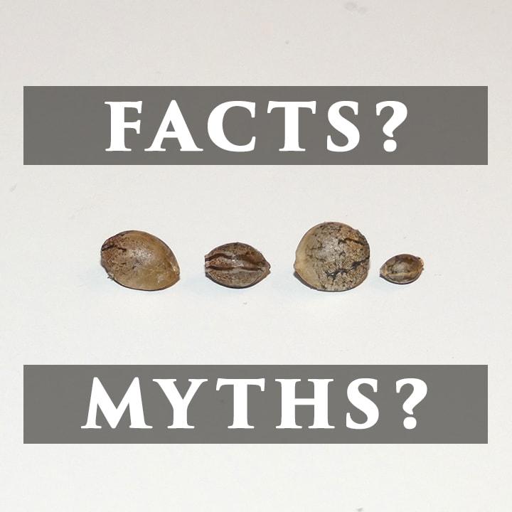 Cannabis Seed Myths