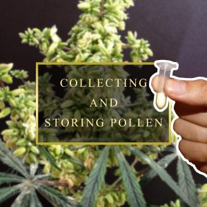Collecting And Storing Pollen