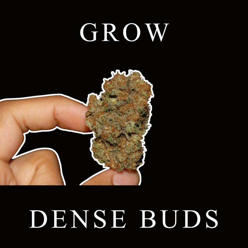 Grow Tips For Denser Buds