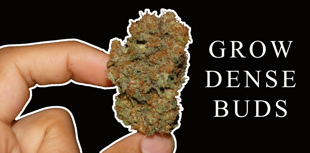 Growing Denser Buds